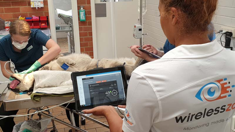 Global Pilot Program for WirelessZoo™ Commences